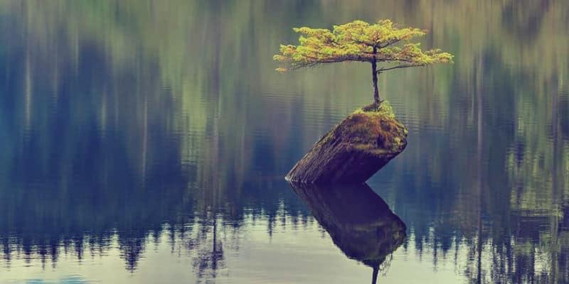 La résilience est la faculté de reprendre son pouvoir